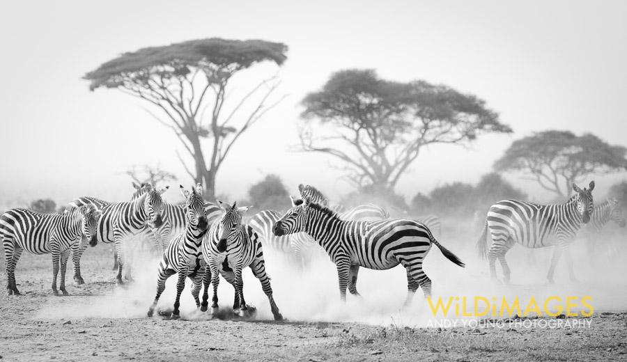 Kenya 2014-19.jpg