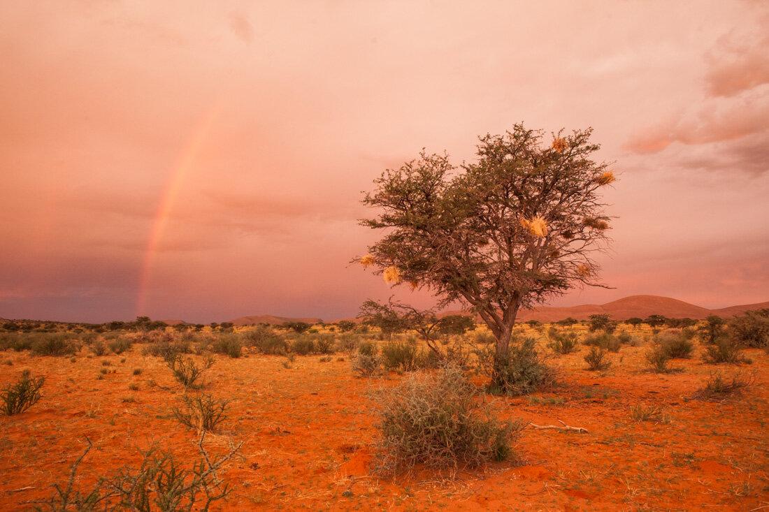 Kalahari (3 of 5).jpg