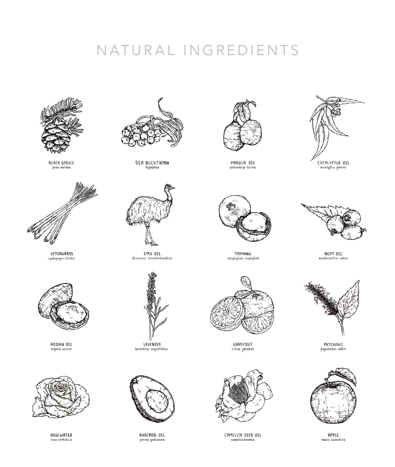 Ingredients List Colour_bw.jpg