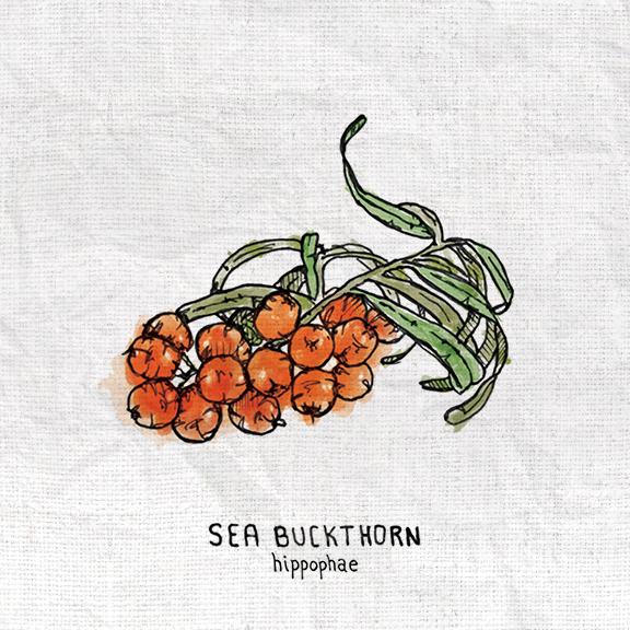 Sea Buckthorn.jpg