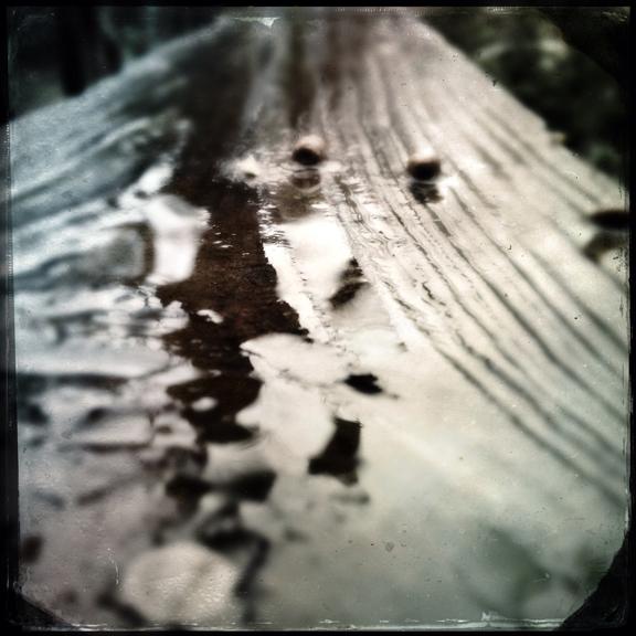 """""""  Rainy Squirrel Turds  """" Feb. 2013"""