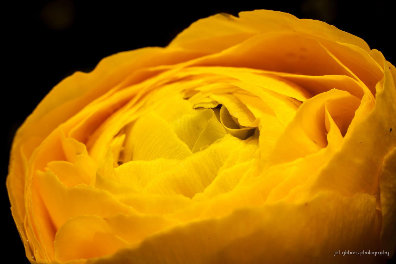 front flower 2.jpg