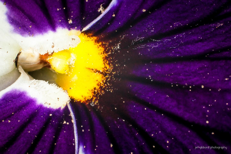 front flower 1.jpg