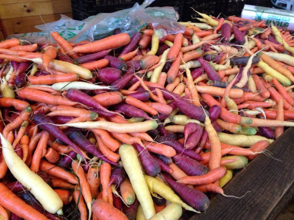 a rainbow of carrots.jpg