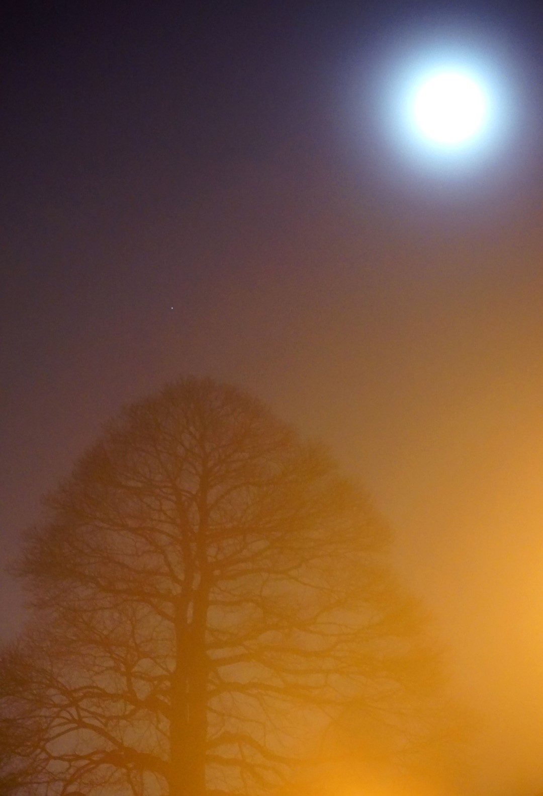 spirit-tree©2015seanhemak (Large).jpg