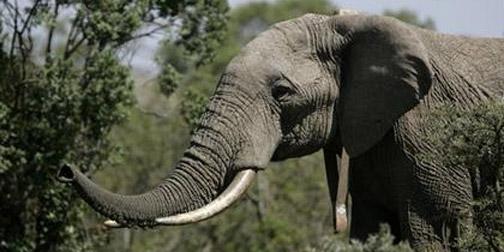 1014-elephant.jpg