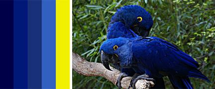 0730-Colour_of_Birds.jpg