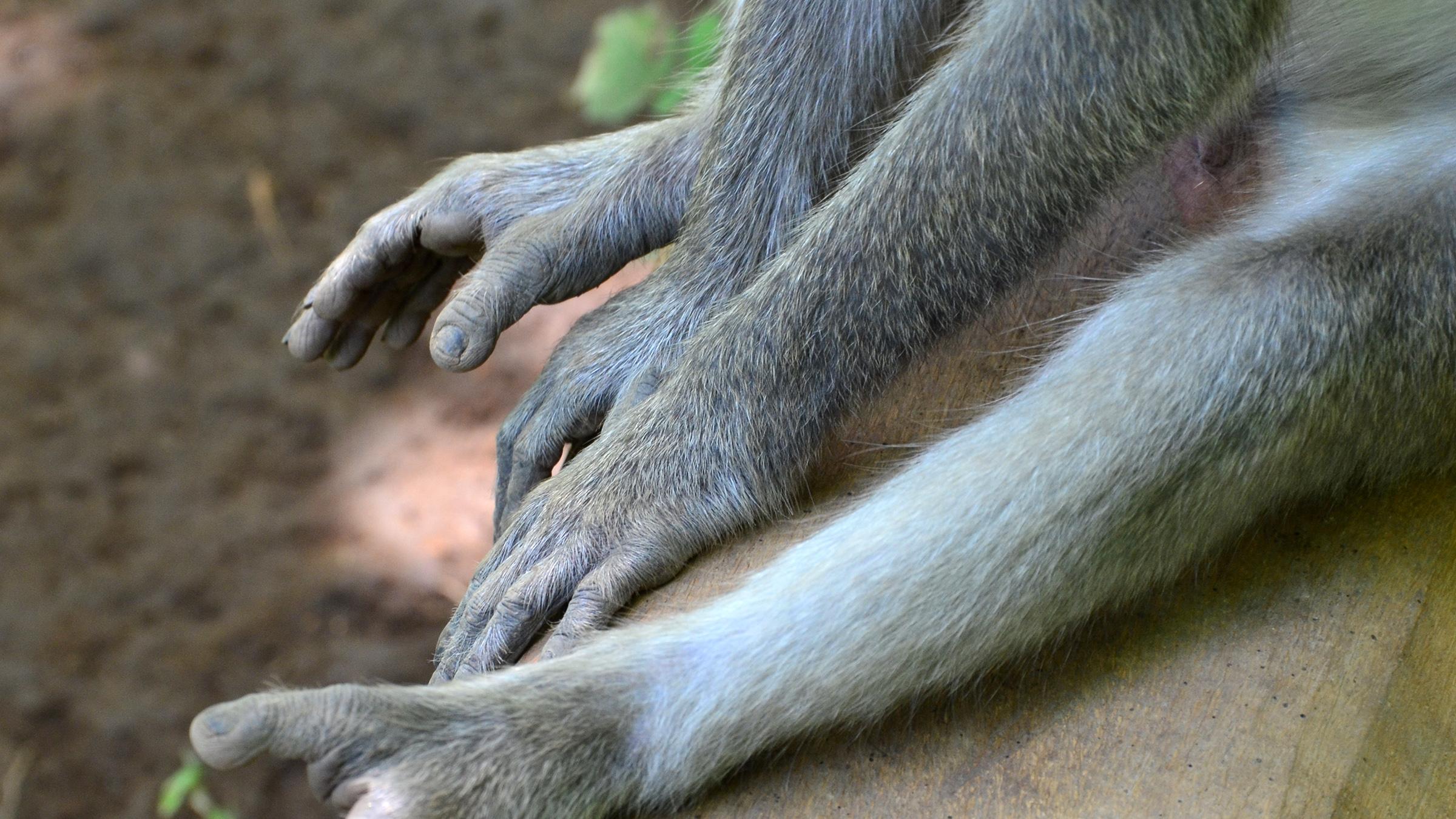 Everyday Monkey