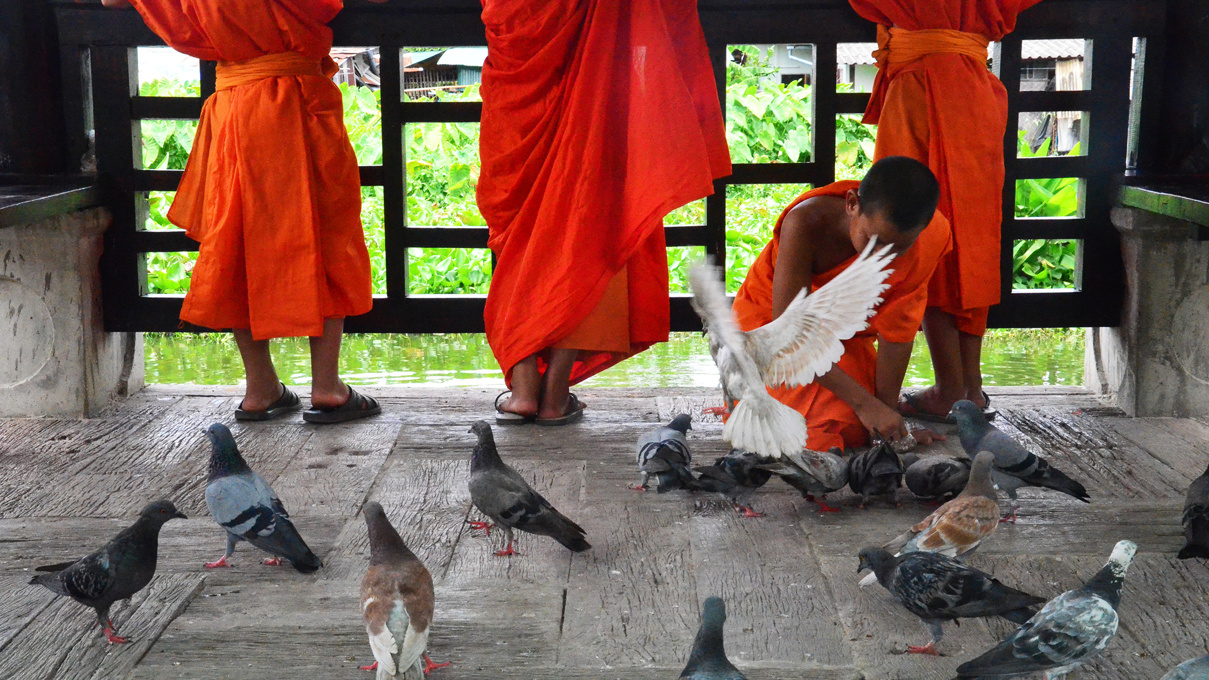 Monk and Birds