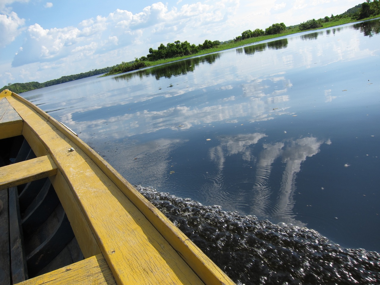 Amazon: River of life