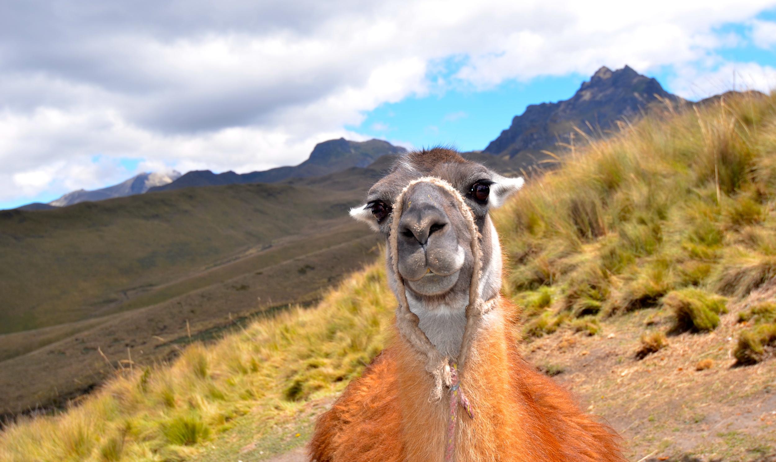 """""""Yo. Welcome to Quito, bro."""""""