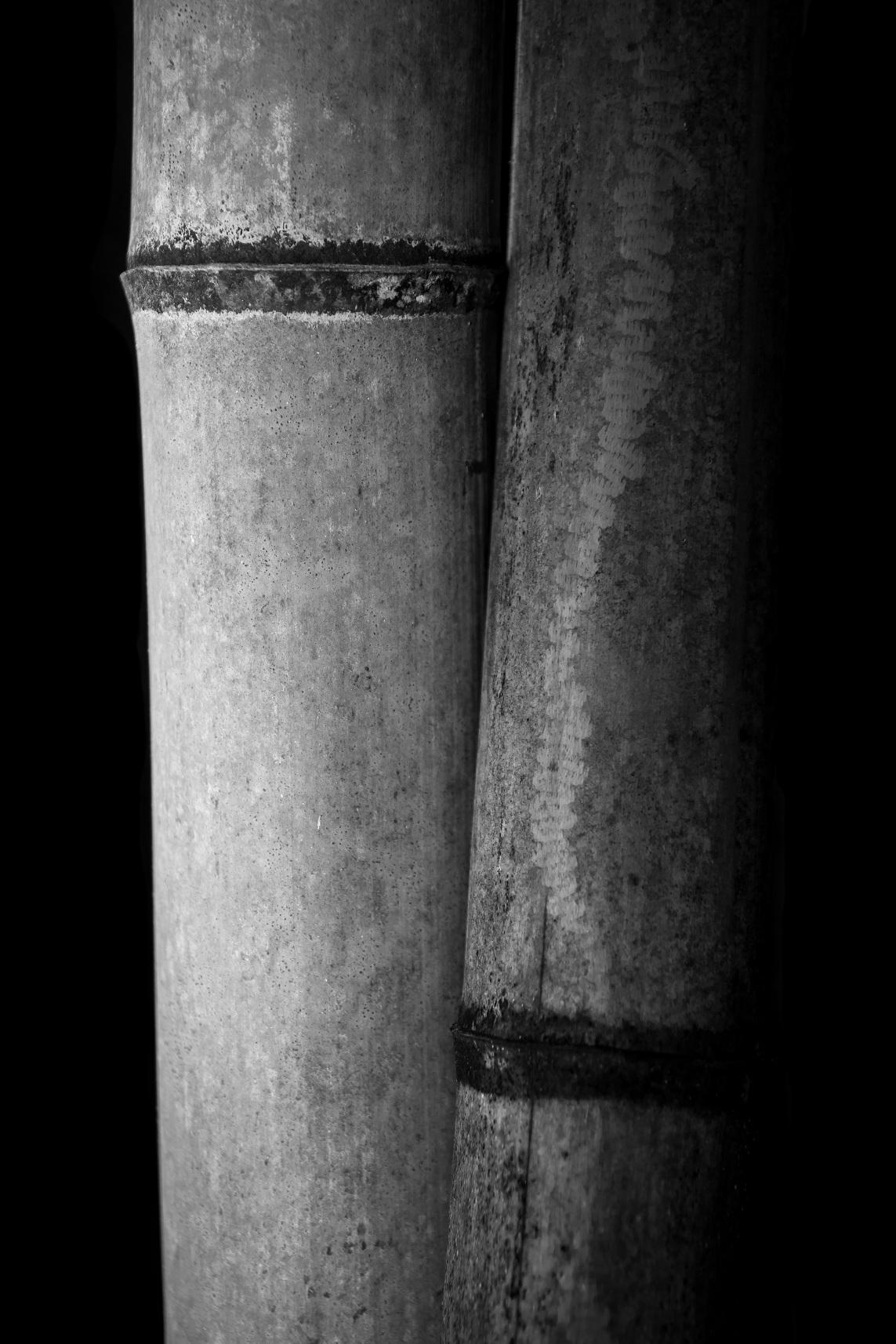 bamboocouple.jpg