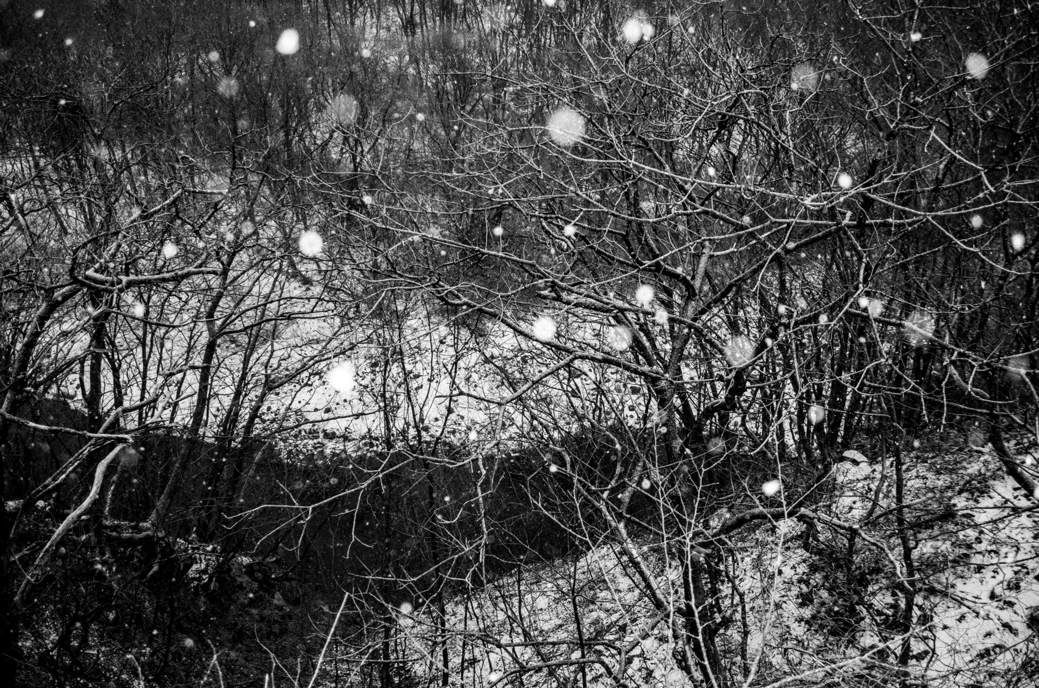 "From ""Winterteeth"""