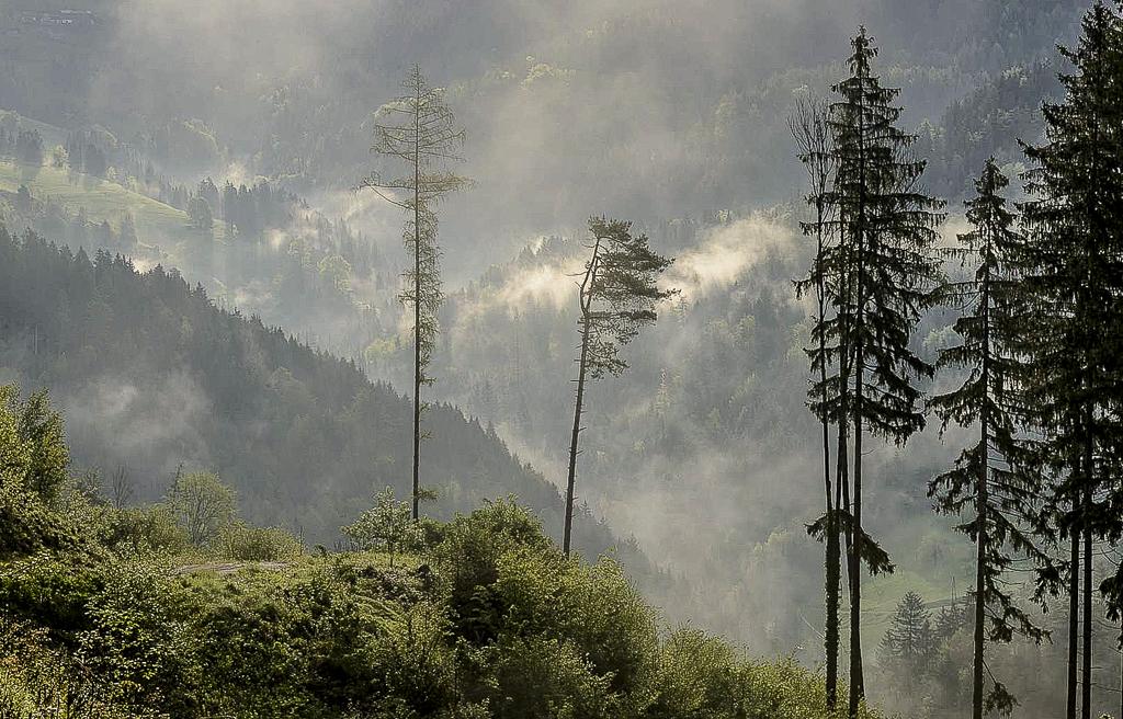 Mist in the Valley.jpg