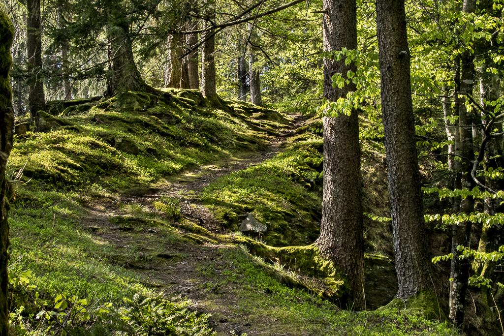 Mystic Forest.jpg