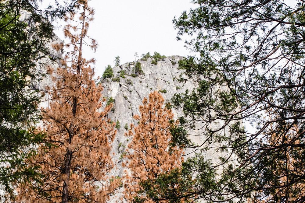 Yosemite_AboutUs.jpg