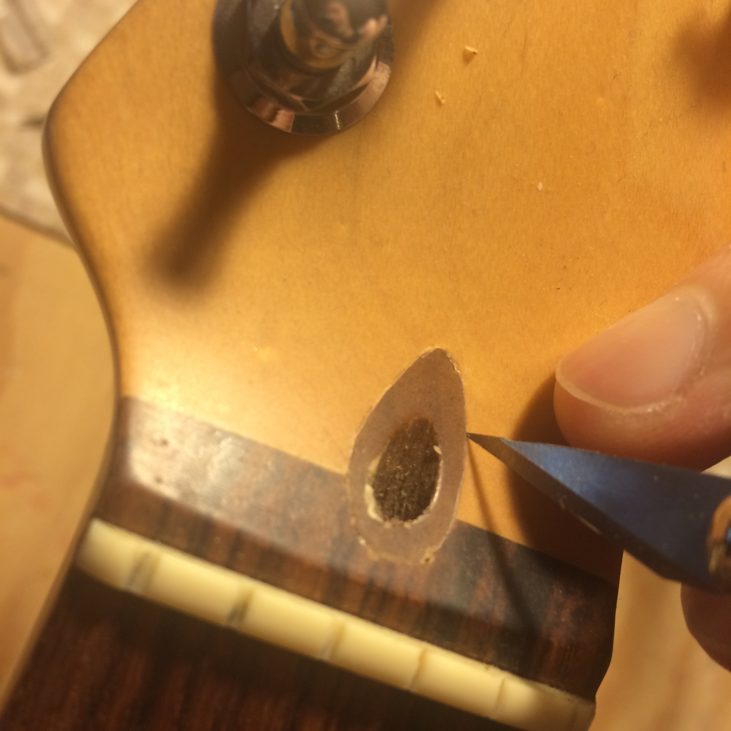 Truss rod wooden plug on Fender guitar. Score around the edge with a sharp knife before removing.