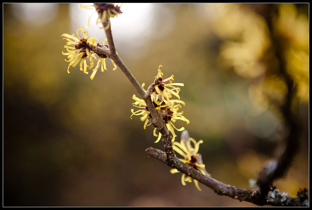 Hints_of_spring_(3284239696).jpg