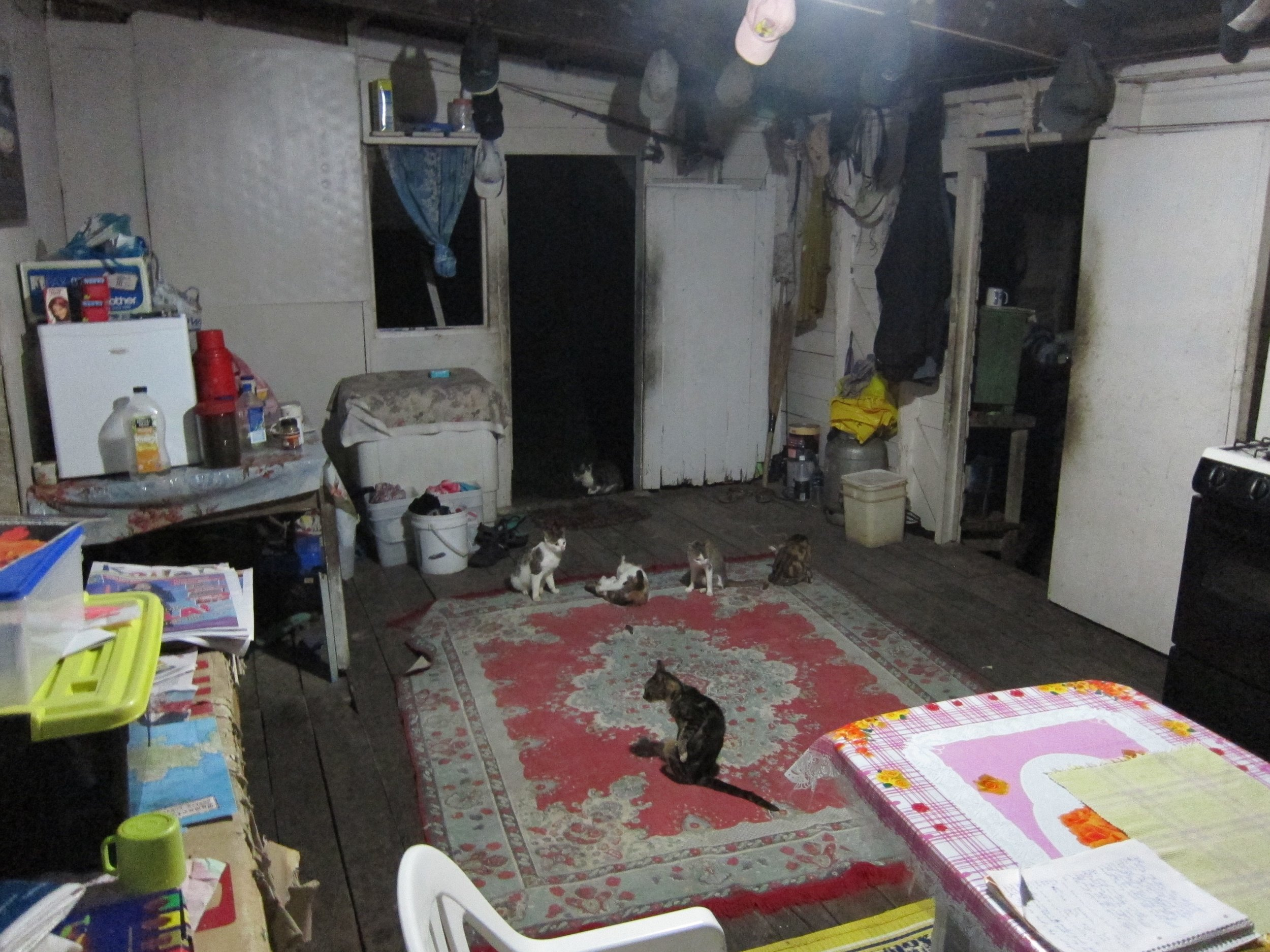 8  The cat pack at Ratu's house.jpg