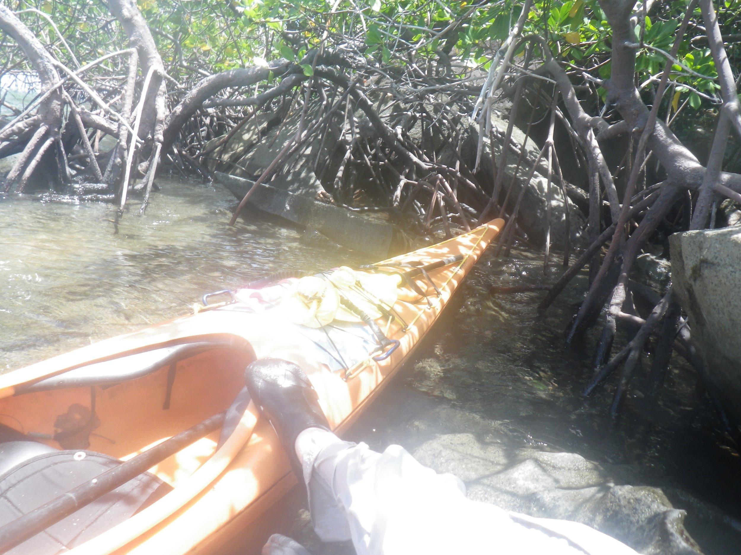 22  Lunch in the mangroves.jpg