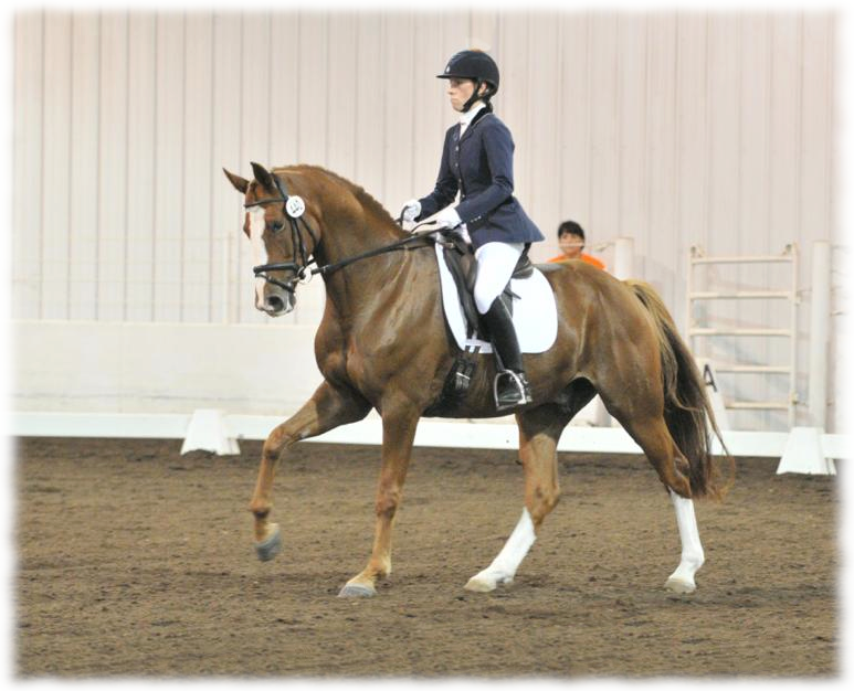 Hemmingway & Erin Herzog were Reserve Champion First Level AA at Regionals photo by  Jesse Franks