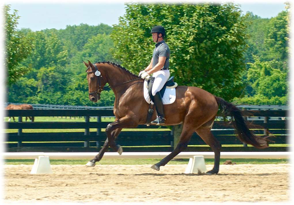 Eisenhower JP at his second horse show.  (photo credit: Allison Gerlt)