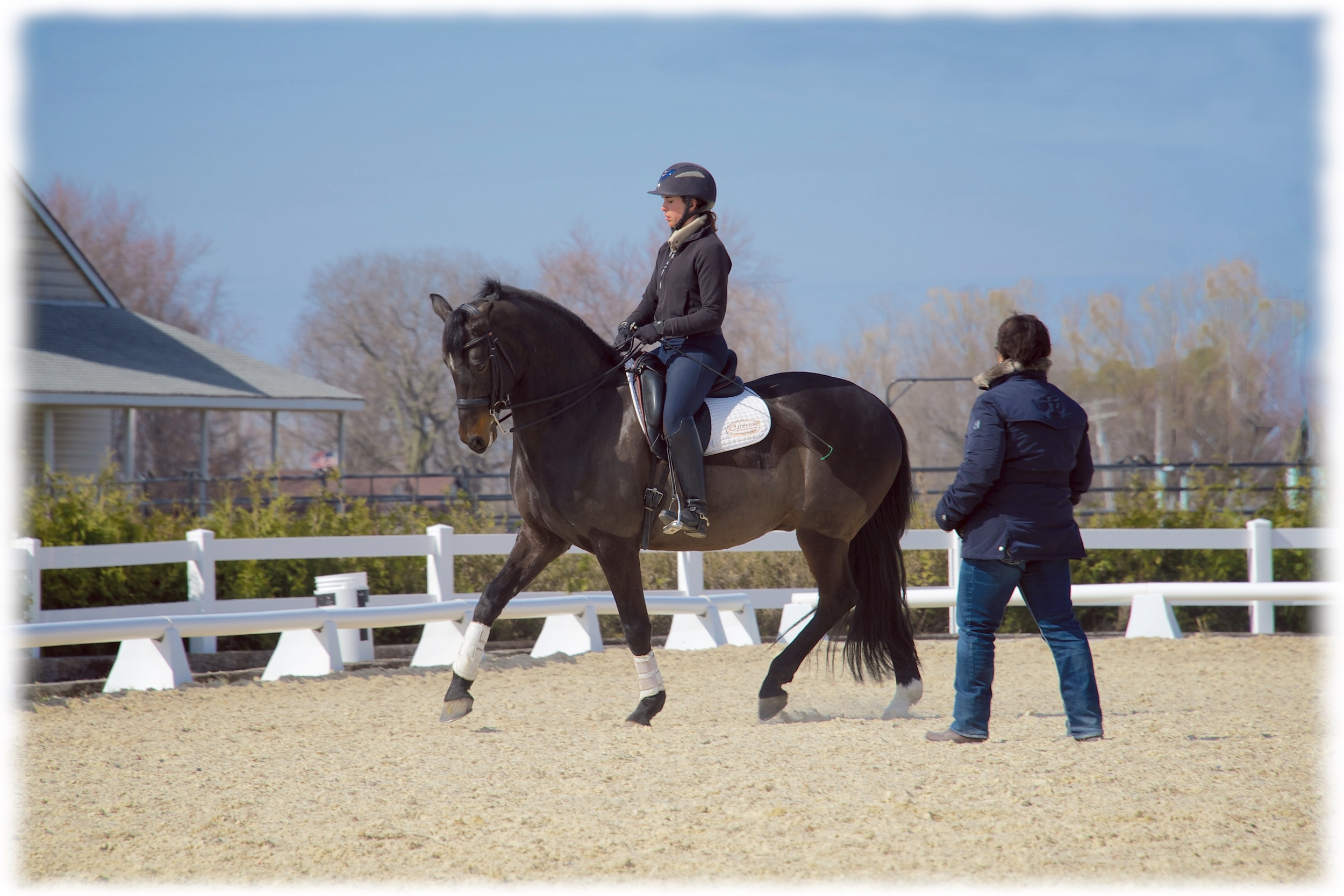 Zlatan M. Ge, owned by Jon & Pinky Noll,ridden by Kate Fleming-Kuhn with Cindy Ishoy