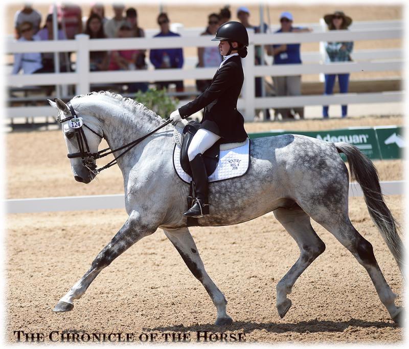 photo courtesy of  Chronicle of the Horse