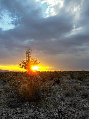 sunset+yucca.jpg