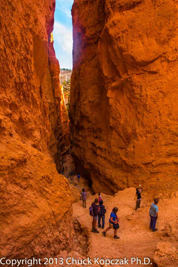 2013-07-09 Bryce Canyon Navajo Trail 06-900px.jpg