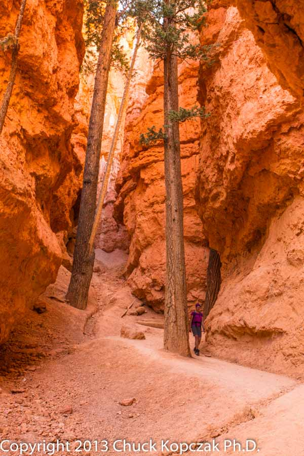 2013-07-09 Bryce Canyon Navajo Trail Beate 03-900px.jpg