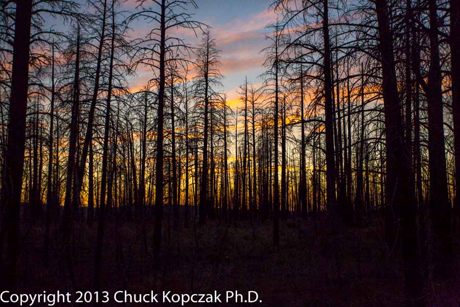 Burned trees silhouetted against a painted sky at sunset in Bryce Canyon National Park.