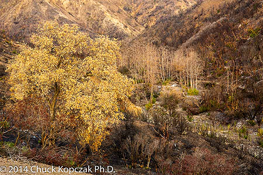 Big Sycamore Canyon, Santa Monica Mountains, Los Angeles, California burned in wildfire in 2013