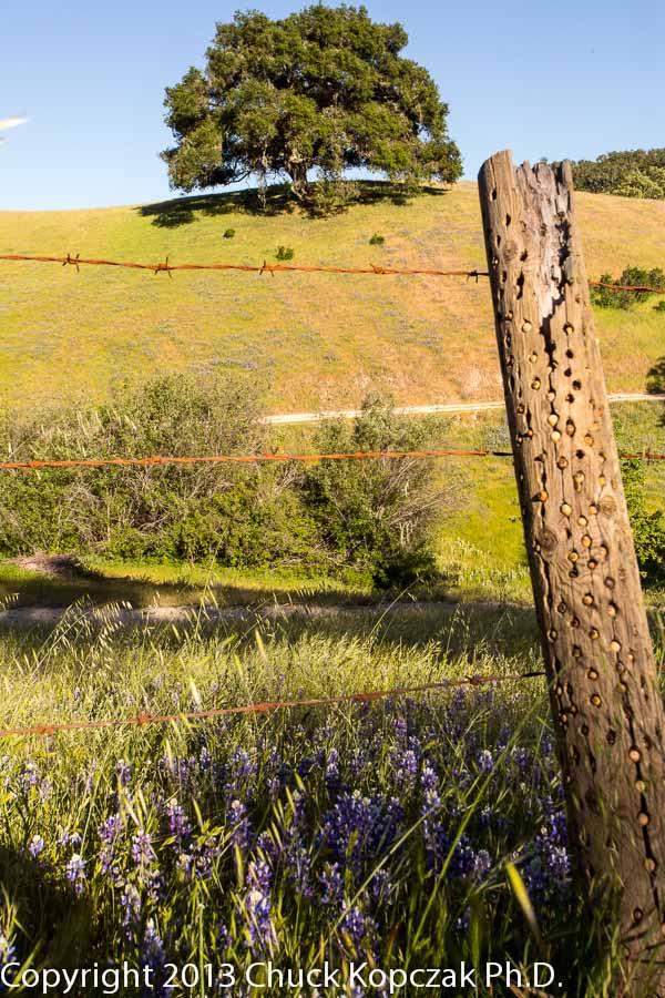 The late afternoon sun bathes a hillside pasture near Nipomo, California.