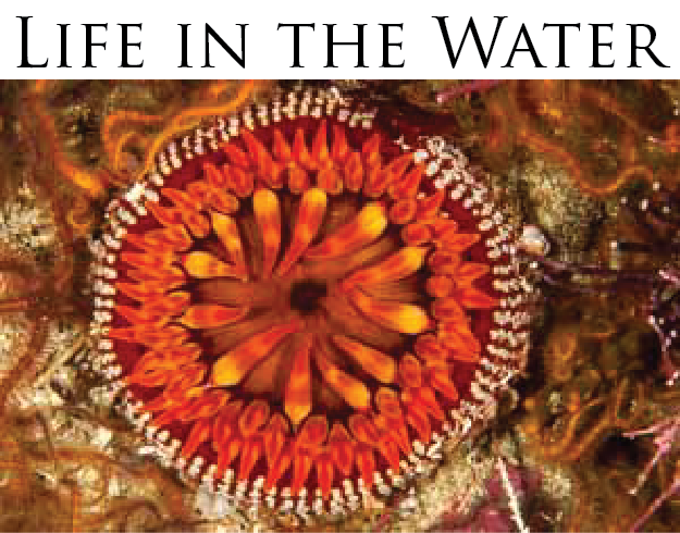 Life in the Water 300x235.png