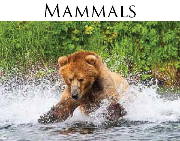Mammals 300x235.png
