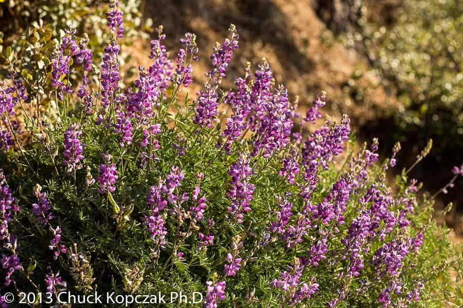 CDKL0923 2013-04-20 Santa Ynez Valley-900px.jpg