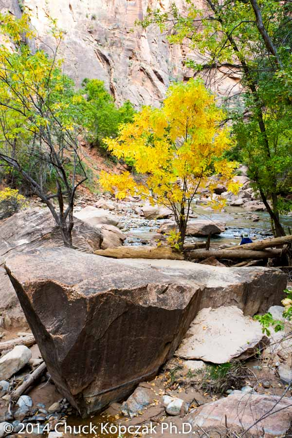Fall colors on the Virgin River, Zion National Park