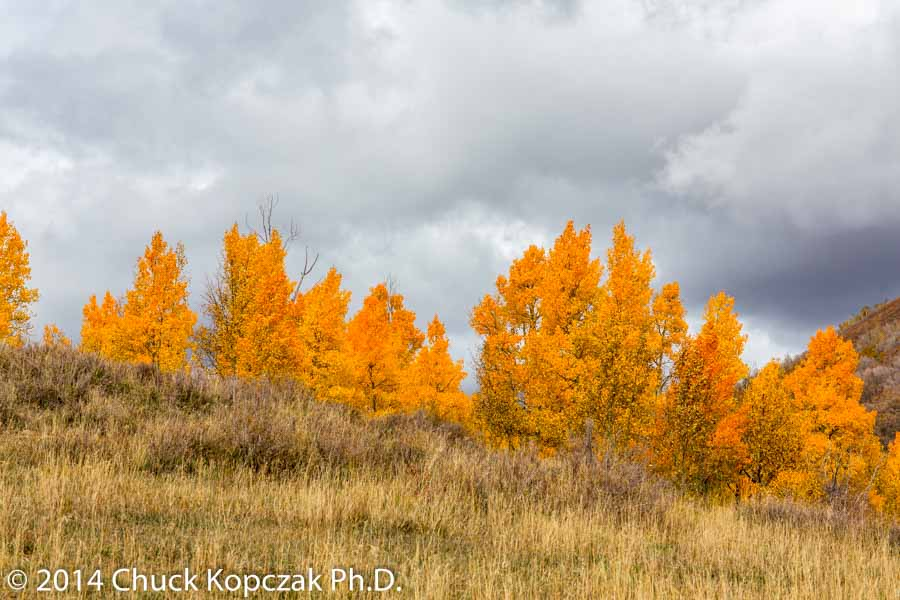 Aspens against a threatening sky, Kolob Terraces Road, Zion National Park