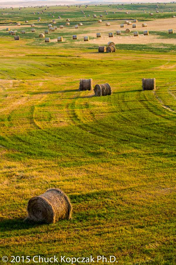 Hay lies cut and rolled on the Montana prairie.