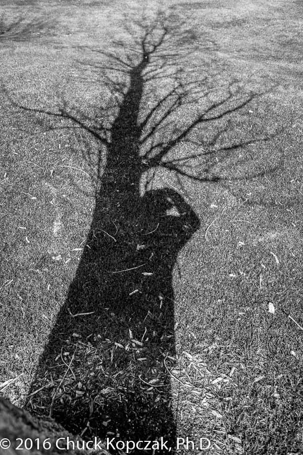 2016-03-24 Missouri River& shadows CDKL7575 900px.jpg