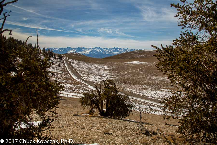 Moonscape at Ancient Bristlecone Pine Forest
