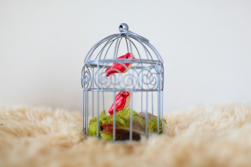 cookie-bird-in-cage.jpg