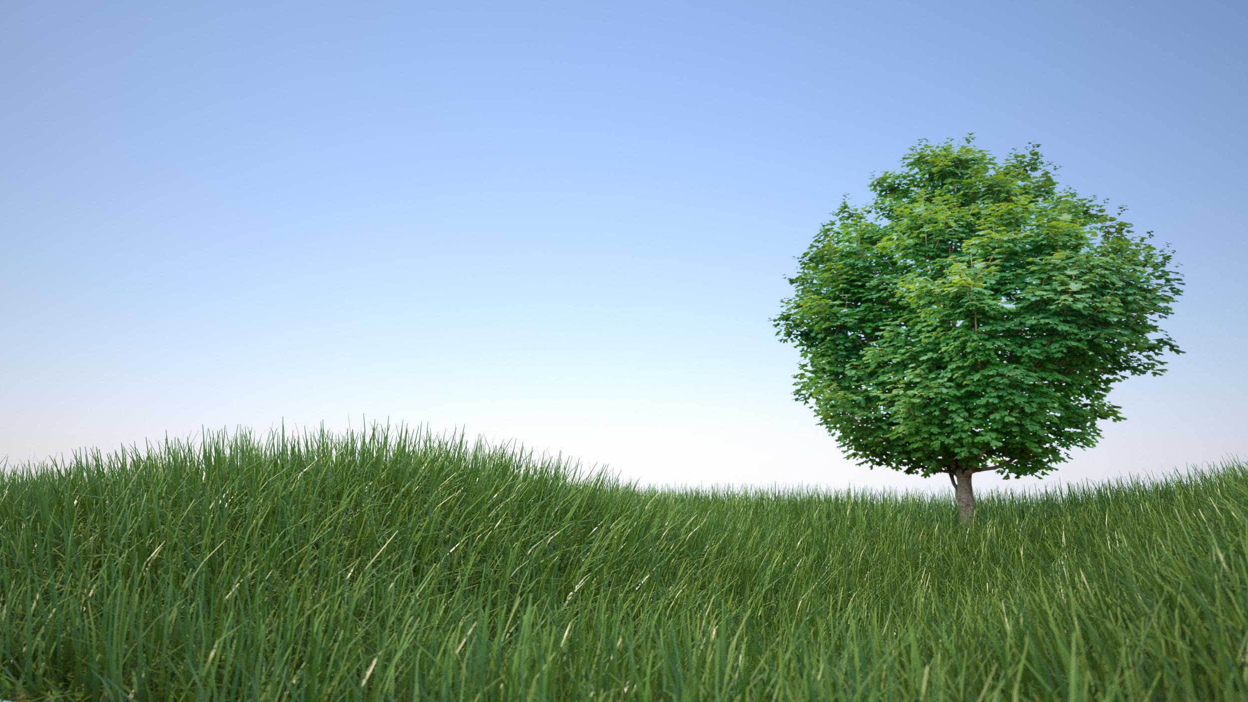 Overgrown Lawn