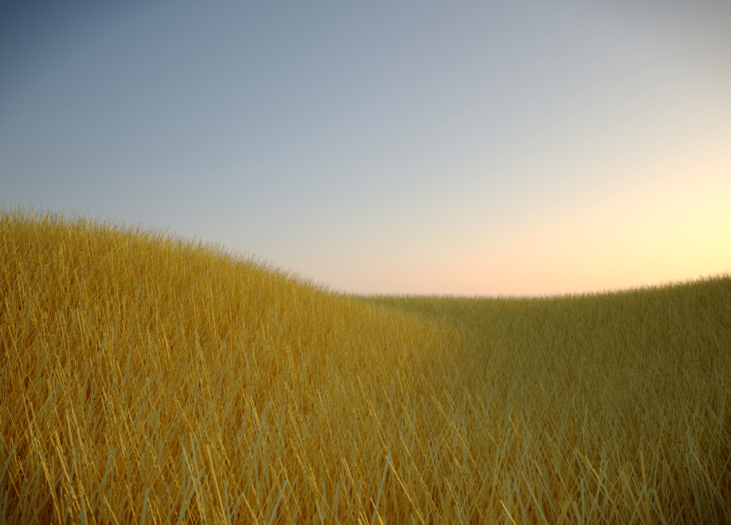 Fields of Gold at Sunset