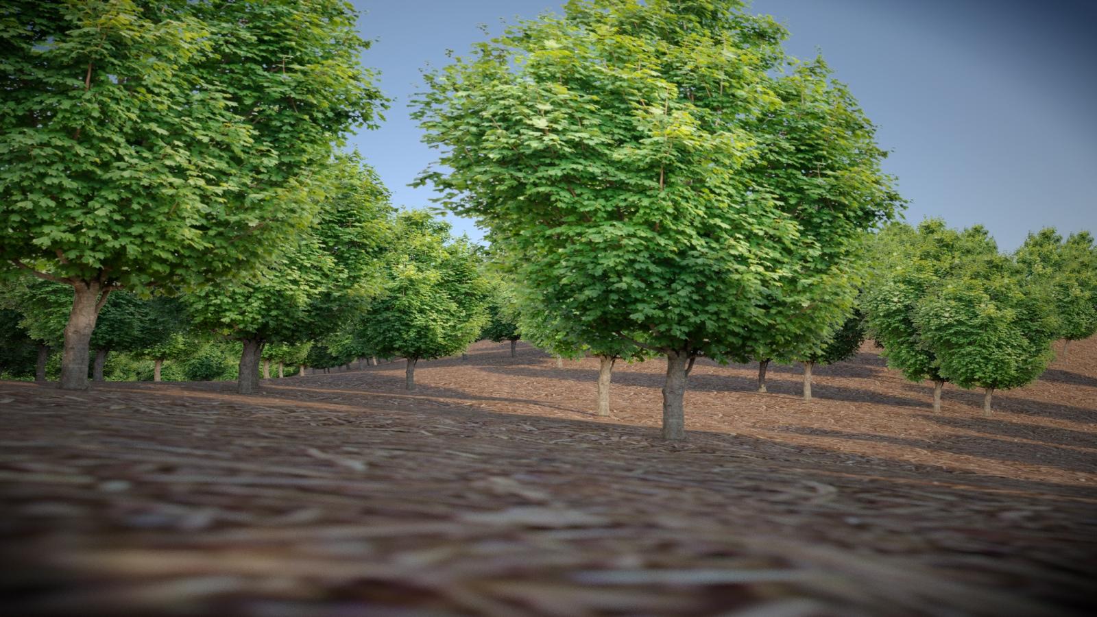 trees on undulating surface.jpg
