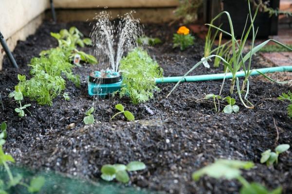 gardening in ground.jpg