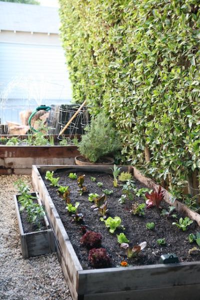 raised garden beds after.jpg