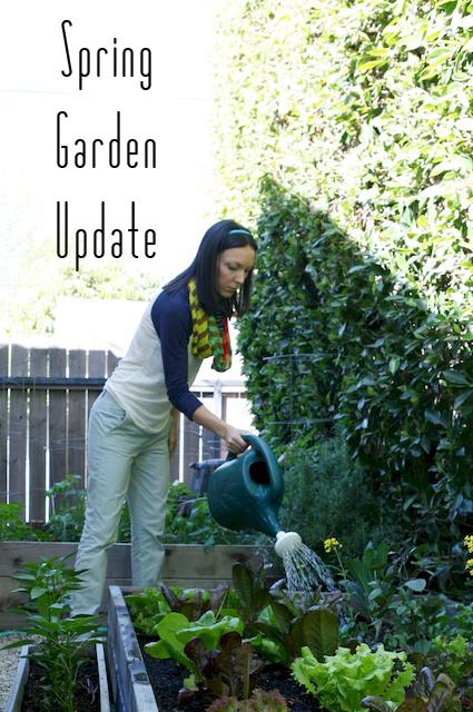 urban gardening water copy.jpg