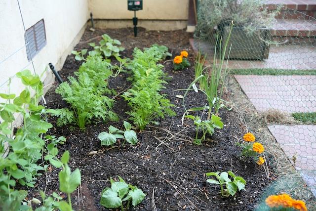 in ground garden.jpg